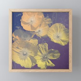 Capricious Tulips II Framed Mini Art Print