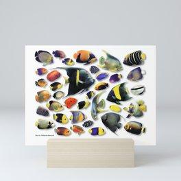 Marine Angelfish Mini Art Print