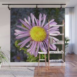 Magenta Aster - A Star of Love and Fidelity Wall Mural