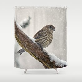 Facing the Storm (House Finch) Shower Curtain