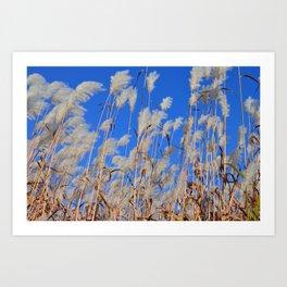 Pampas in the sky Art Print