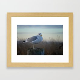 jonathan the sea gull Framed Art Print