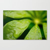 jamaica Canvas Prints featuring Jamaica Greenery by Heartland Photography By SJW