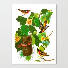 Baltimore Oriole Bird Canvas Print
