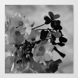 Lemon Clover Wildflowers Bouquet Canvas Print