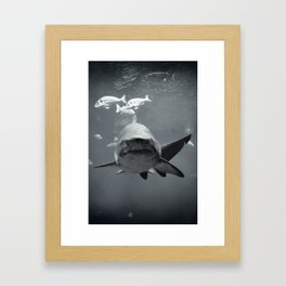 Shark Intense Framed Art Print