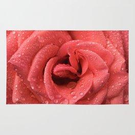 Rosa rosa Rug