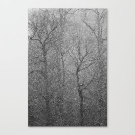 The Lines of Trees in a Whiteout Canvas Print