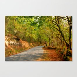 In the midst of the oaks ... Canvas Print