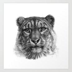 Snow Leopard  G42 Art Print