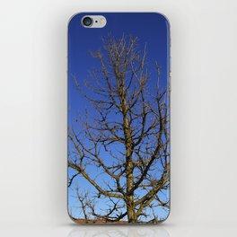 Bur Oak, Quercus macrocarpa, Wisconsin tree, prairie, savanna iPhone Skin