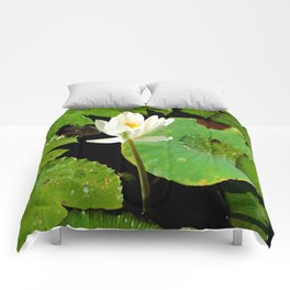 White Lilly Comforters