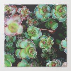 Succulents II Canvas Print