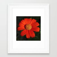 mexican Framed Art Prints featuring Mexican Sunflower by Awesome Palette