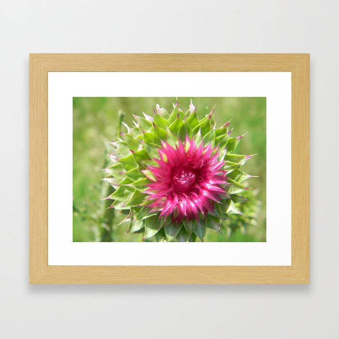 Beauty or Beast? Framed Art Print