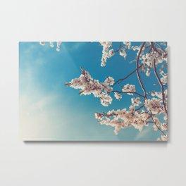 Spring Cherry Sakura White Flowers,Toning Metal Print