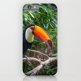 A toucan laid on a tree branch in the forest iPhone Case