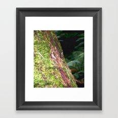 Moss & Fungi Framed Art Print