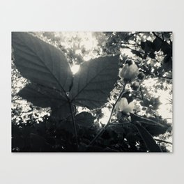 "Monochrome Botanical Art ""Raspberry Leaf sunset"" Canvas Print"