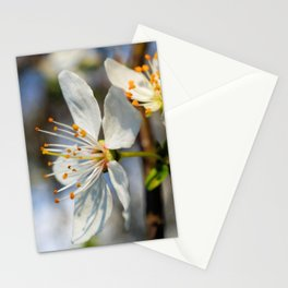 Flowering Plum Stationery Cards