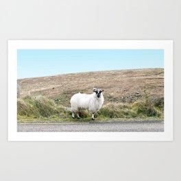 Lone Sheep on an Irish Road Art Print