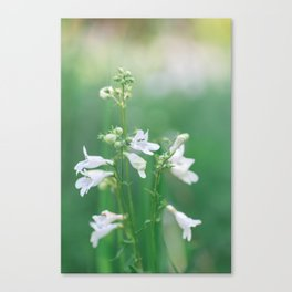 White and Green - Wildflower Photography Canvas Print