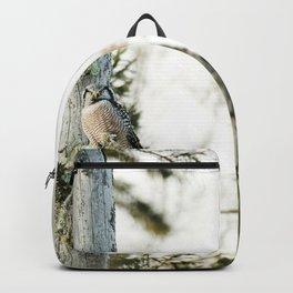 Northern Hawk Owl Backpack