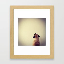 Pug staring up the wall Framed Art Print