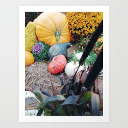 Freshly picked assortment of fall pumpkins, gourds, Autumn Decorations Art Print