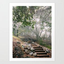 Mount Tamalpais State Park Art Print