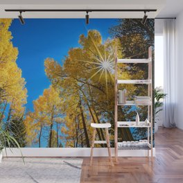 AUTUMN SUN PHOTO - COLORADO ASPEN TREES IMAGE - FALL NATURE PICTURE - LANDSCAPE PHOTOGRAPHY Wall Mural