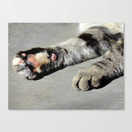 Catspaws Canvas Print