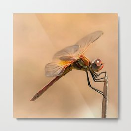 Painted Dragonfly Isolated Against Ecru Metal Print