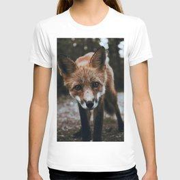 Curious Fox / Alaska T-shirt
