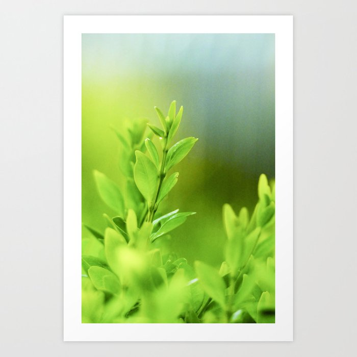 Green Harmony Art Print