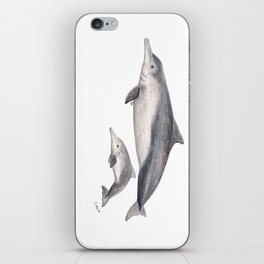 Australian humpback dolphin (Sousa sahulensis) with baby iPhone Skin