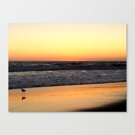 Lone Bird Tiptoes on the Reflecting Beach at Sunset Canvas Print