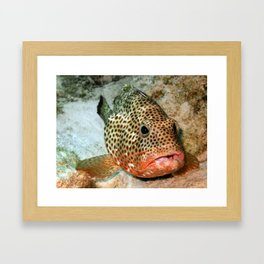 Coral Grouper Being Cleaned Framed Art Print