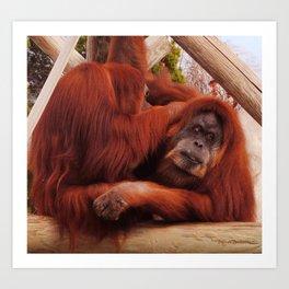 Grooming Orangutans Art Print