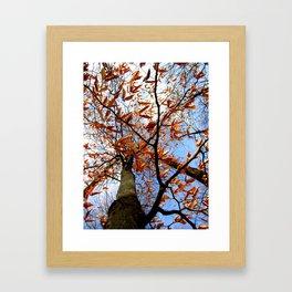 Autumn's glory Framed Art Print