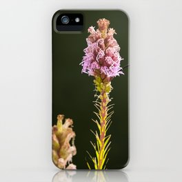 Hummingbird and flower II iPhone Case
