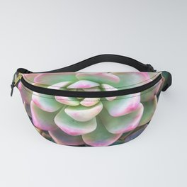 closeup green and pink succulent plant background Fanny Pack