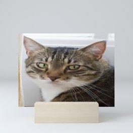Unamused Kitty (golden boy) Mini Art Print