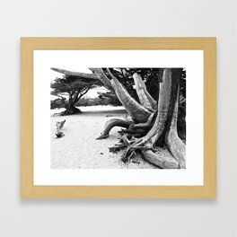 Cypress I Framed Art Print