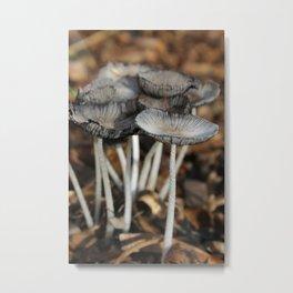 Mushrooms in Color Metal Print
