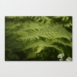Jane's Garden - Fern Fronds Canvas Print