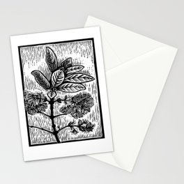 Pygmy Fringe Tree Stationery Cards