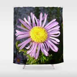 Magenta Aster - A Star of Love and Fidelity Shower Curtain