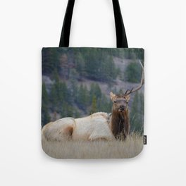 Elk with one antler in Jasper National Park | Canada Tote Bag