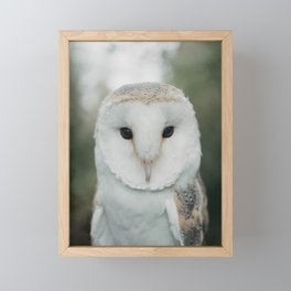 Barney The Owl Framed Mini Art Print